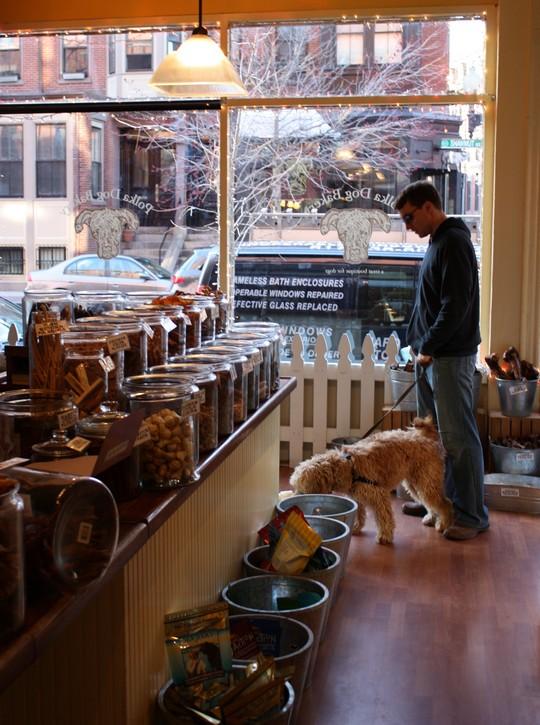 hundebutik7